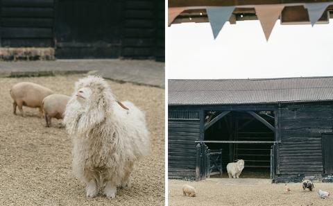 south-farm-wedding-mike-kate-ria-mishaal-photography-005